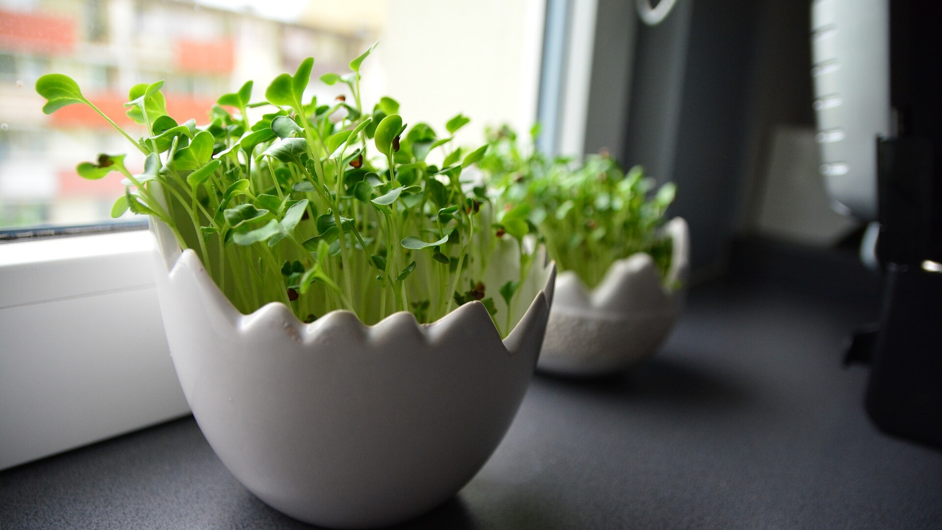 best plants to grow in your kitchen this winter
