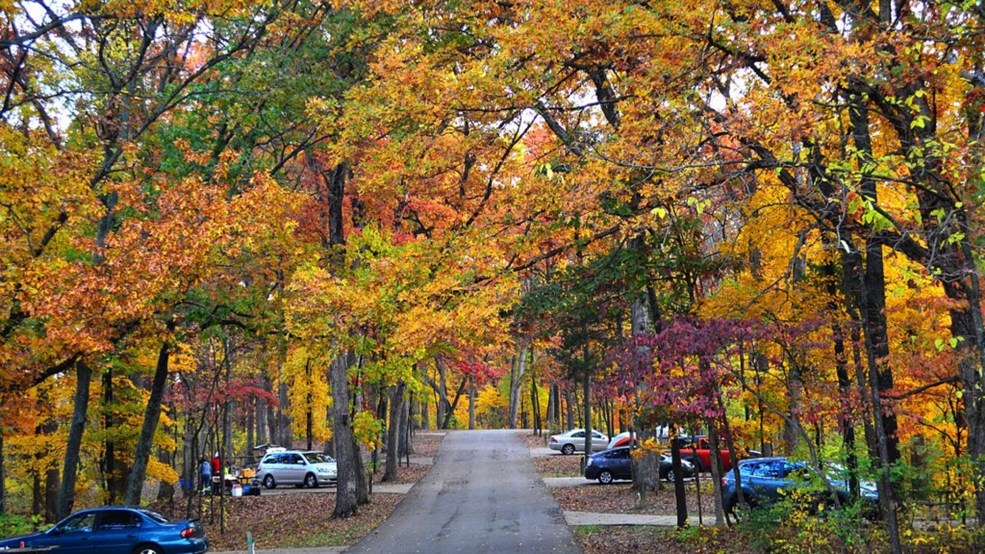 mcdermott remodeling fall foliage around St. Louis